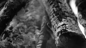 黑白灼烧的火木头和炭烬 免版税图库摄影