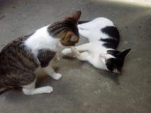 黑白猫使用 库存照片