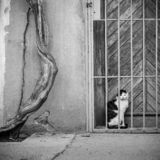 黑白猫 库存图片