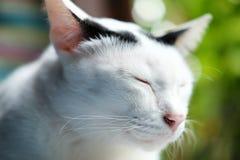黑白猫坐窗口 免版税库存照片