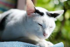 黑白猫坐窗口 库存图片