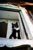 黑白猫坐老破裂的木村庄胜利 图库摄影