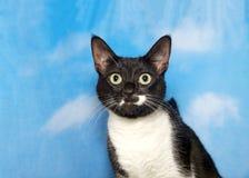 黑白猫纵向 免版税库存照片