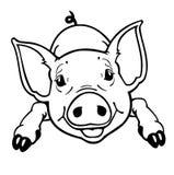 黑白的小猪 免版税库存照片