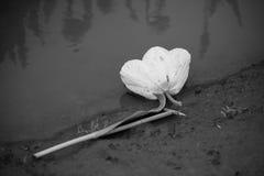 黑白的背弃的诺言 图库摄影