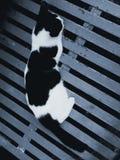 黑白色猫说谎的灰色金属 免版税库存图片