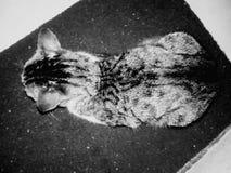 黑白色猫黑色橡胶席子 免版税库存照片