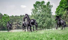 黑白花的母马疾驰的牧群  库存图片