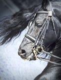 黑白花的马纵向 免版税库存图片