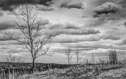 黑白阴沉的树 免版税库存图片