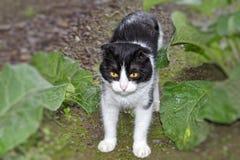 黑白颜色一只幼小猫  库存图片