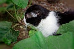 黑白颜色一只幼小猫  库存照片