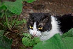 黑白颜色一只幼小猫  免版税图库摄影