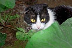 黑白颜色一只幼小猫  免版税库存图片