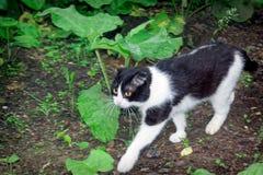 黑白颜色一只幼小猫  免版税库存照片