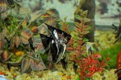 黑白颜色鱼 免版税库存图片