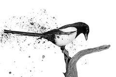 黑白鸟和喷漆 免版税库存照片