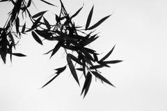 黑白,竹子叶子 免版税库存照片