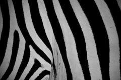 黑白 库存图片