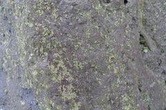黑石头表面与地衣的 库存照片