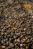 黑石金岩石 图库摄影