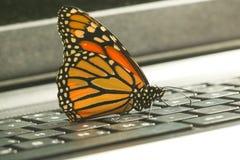 黑脉金斑蝶在膝上型计算机键盘ecolog的丹尼亚斯plexippus 库存图片