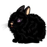 黑色例证美味的兔子 免版税库存图片