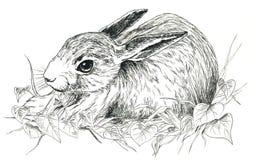 黑色兔子白色 库存图片