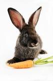 黑色兔宝宝 免版税库存照片