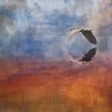 黑色加冠了被构造的苍鹭晚上 库存照片