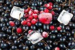 黑色和红浆果 免版税库存照片
