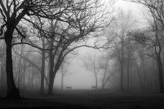 黑色和bhite的有雾的森林公园 免版税库存图片