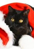 黑色圣诞节小猫 免版税库存图片