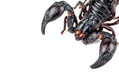 黑色在白色的油煎的蝎子 免版税库存照片