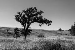 黑色孤立结构树白色 库存图片