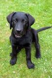 黑色小狗猎犬 库存图片