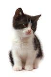 黑色小猫空白的一点 免版税库存照片