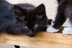 黑色小猫纵向 库存图片