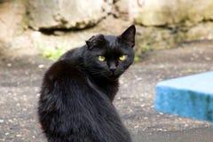 黑色小猫纵向 图库摄影