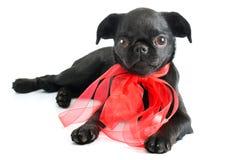 黑色小的小狗 图库摄影