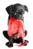 黑色小的小狗 库存图片