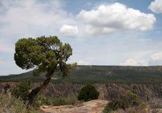 黑色峡谷孤立结构树 免版税库存照片
