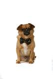 黑色弓褐色逗人喜爱的狗关系 免版税库存图片