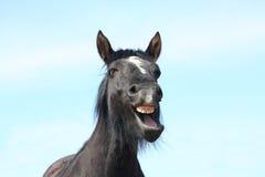 黑色打呵欠的马纵向  库存图片