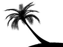 黑色掌上型计算机palmtree结构树白色 免版税库存照片