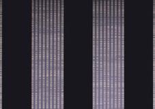 黑色排行二朵紫罗兰墙纸 图库摄影