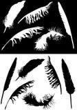 黑色收藏用羽毛装饰白色 免版税图库摄影