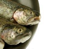 黑色新鲜的查出的牌照鳟鱼 免版税图库摄影