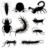 黑色昆虫 库存图片