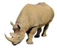 黑色查出的犀牛 库存照片